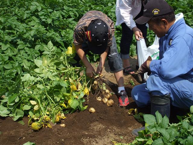 6月26日(日)からジャガイモの収穫体験を再開します