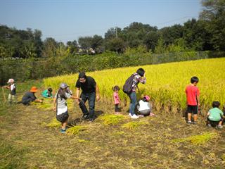 10月10日(月祝)に稲刈り体験を開催します