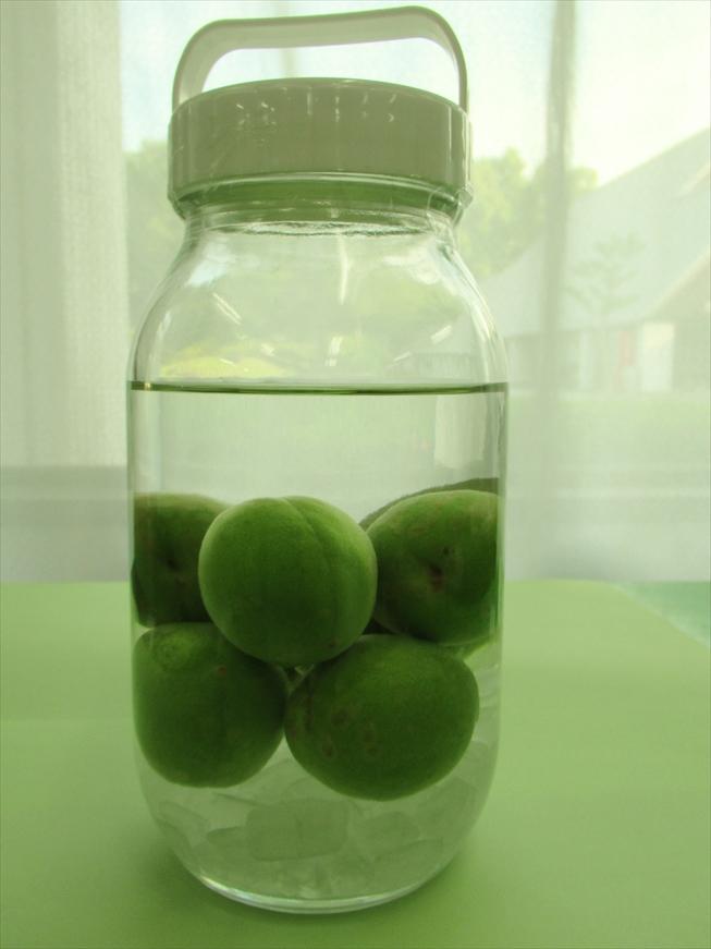 農林公園:青梅を収穫し梅酒作りの体験教室を開催します