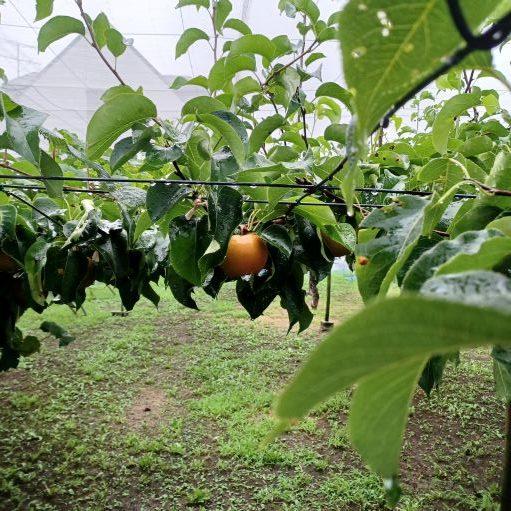 農林公園:8月14日(土)収穫体験のお知らせ